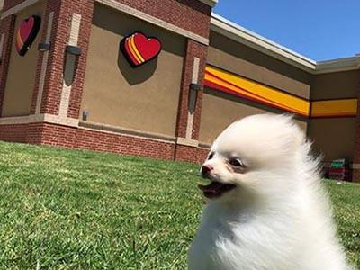 Love's dog parks