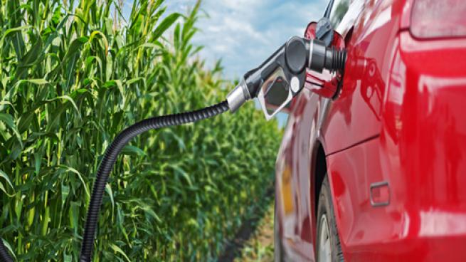 Renewable fuel image of a car getting fuel from a cornfield