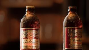 Budweiser Pre-Prohibition Brew
