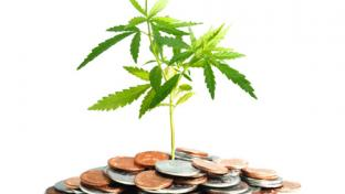 Marijuana plant and money